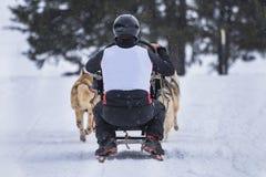 выследите село таблицы скелетона Польши pasterka musher гор собак малое стоковое изображение rf