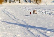 Выследите скакать и летать на взлётно-посадочная дорожка на парке спорта Стоковые Фото