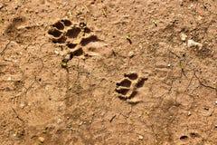 Выследите след ноги на земле с грязью, животными и природой стоковое фото rf