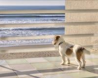 Вытаращиться вне к морю Стоковые Изображения