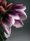 вытекая весна Стоковое Фото