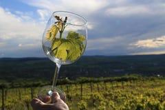 Вытекая вино Стоковая Фотография RF