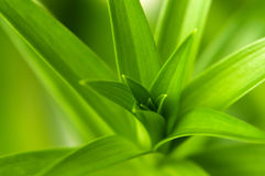 вытекая листья Стоковые Изображения RF
