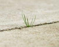 вытекая трава Стоковое фото RF