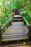 выучьте природу для того чтобы трассировать гулять деревянный стоковые фотографии rf
