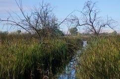 2 выхвата стоя предохранитель над водой в болоте Стоковое фото RF