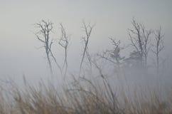 Выхваты дерева на туманном молчаливом утре осени Стоковая Фотография