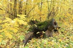 Выхват в лесе Стоковые Фотографии RF