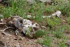 Выхват с кактусом стоковые изображения rf