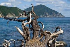 выхват 4 морей Стоковая Фотография