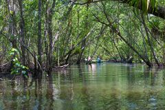 Выходить езды шлюпки мангровы Стоковое Фото