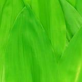 выходит долина лилии Стоковое фото RF