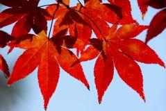 выходит красный солнечний свет Стоковое фото RF