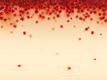 выходит красный цвет клена иллюстрация штока