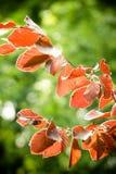 выходит красный цвет Стоковая Фотография