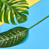 выходит ладонь тропической Яркий комплект лета минимально Стоковая Фотография