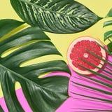 выходит ладонь тропической Яркий комплект лета минимально Стоковые Изображения