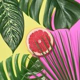 выходит ладонь тропической Яркий комплект лета минимально Стоковая Фотография RF