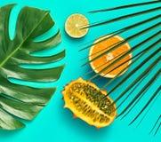 выходит ладонь тропической Яркий комплект лета vegan Стоковые Фото