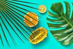 выходит ладонь тропической Яркий комплект лета vegan Стоковая Фотография RF