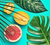 выходит ладонь тропической Яркий комплект лета vegan Стоковое Фото