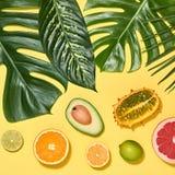 выходит ладонь тропической Яркий комплект лета vegan Стоковые Фотографии RF
