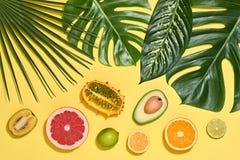 выходит ладонь тропической Яркий комплект лета vegan Стоковое Изображение