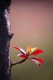 выходит новая весна Стоковая Фотография RF