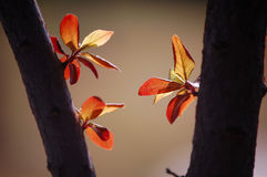 выходит новая весна Стоковое фото RF