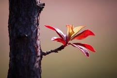 выходит новая весна Стоковые Изображения RF