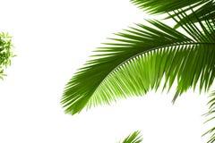 выходит пальма Стоковое фото RF