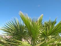 выходит пальма Стоковые Фотографии RF