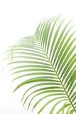 выходит пальма стоковая фотография