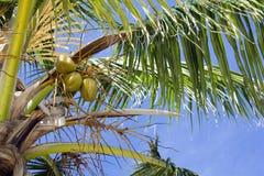 выходит пальма Стоковая Фотография RF