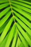 выходит пальма стоковые фото