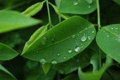 выходит предложение raindrops макроса Стоковые Изображения RF