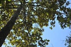 Выходит предпосылка в тропический сад, текстура зеленых листьев Стоковые Изображения