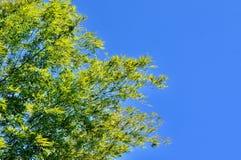 Выходит предпосылка в тропический сад, текстура зеленых листьев Стоковые Фото