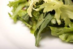 выходит салат стоковое фото