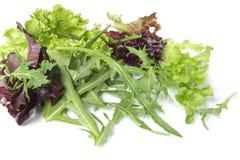 выходит салат Стоковые Изображения RF