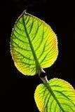 выходит солнечний свет стоковое изображение rf