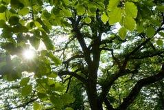 выходит солнечность Стоковое Фото