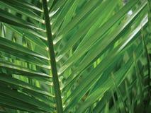 выходит тропической Стоковое Изображение RF