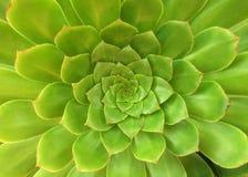 выходит succulent Стоковое Фото