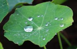 выходит waterdrops Стоковое Изображение