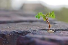 Выходить зеленого растения Стоковая Фотография
