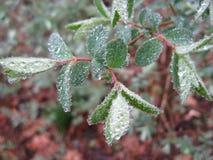 выходит весна raindrops Стоковое Изображение RF