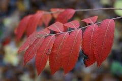 выходит красный цвет Стоковое Изображение
