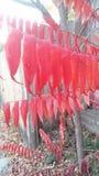 выходит красный цвет Стоковое Изображение RF