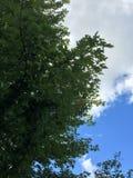 выходит небо Стоковая Фотография RF